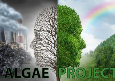 algae-project.